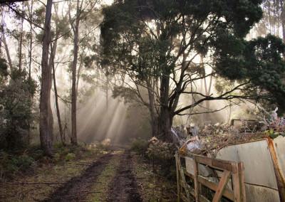 Farm gate rays